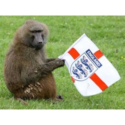 a little off topic, but hilarious becuase...well...its got monkeys, flags...and cuz its merseyside.