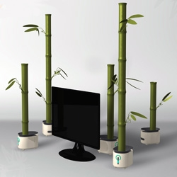 Bamboos host speakers in the most spectacular way! As you nurture the bamboo, it reciprocates by delivering richer, deeper sound.