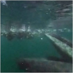 incredible footage from last night's nature's great events of a humpback whale feeding on baitballs.