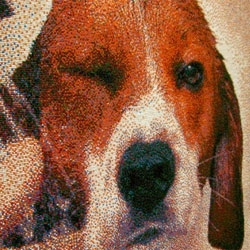 Adorable beagle mosaic created from 221,000 candy sprinkles by Joel Brochu.