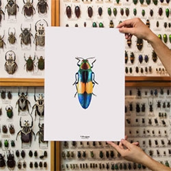 Villveggen launches the first butterflies and beetles prints collection. More than 20 posters designed in Barcelona. Feel the nature in your home.