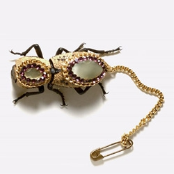 Tenebrionid Beetle - Living Beetle Jewelry. The next trend in tiny creatures that celebrities carry around with them.