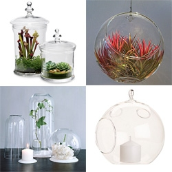 After purchasing a mini venus fly trap ~ we needed something to display it in... here is Shade Elaine's research on Bell Jars and Glass Bubbles.