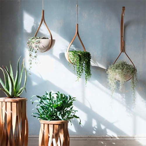 Tom Raffield Green Range - lovely bent plywood planters