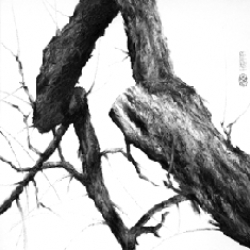 "Artist Ben Sum creates charcoal tree drawings that look like photographs from far away. You'll also find ""remixes"" of famous paintings on the site."