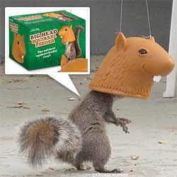 Big Head Squirrel Feeder!