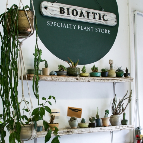 Bioattic - Specialty plant store in Auckland. Lovely feature from Happy Interior Blog.
