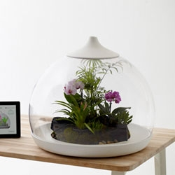 Samuel Wilkinson's Biome. The terrarium contents can be cared for via a smartphone or iPad app which remotely controls the water, climate and nutrients.