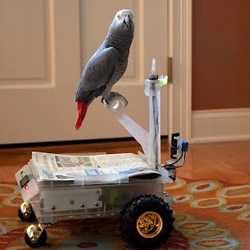 Bird Buggy by Andrew Gray allows his trained parrot to drive around the house. When it's time to put the bird away, Bird Buggy is able to dock itself to a base station utilizing a web camera.