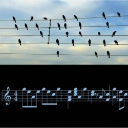 A musician became intrigued by a picture of birds on electric wires in his newspaper.  They seemed to be creating musical notation by their position.  And here it is... art imitating nature or the other way around?