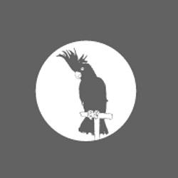the swiss company tarzan has some pretty cool shirts, the black cockatoo's kinda cool.