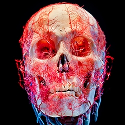 A series of stunning still-life images featuring preserved human skulls and bodies made by the photographer James Bareham.