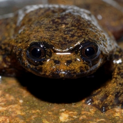 This lungless frog is one of 123 new species just discovered in Borneo. The WWF provides a report on the island's rich wildlife.