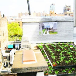 In NYC the Bowery Mission's new rooftop farm!