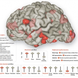 A visual map of what happens in our brains when we are in love by Scientific American.