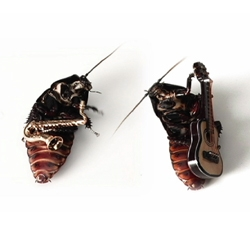 These are some really talented bugs! Makes you second guess calling in the exterminator.
