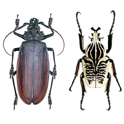 Biggest, Fastest, Bloodiest: Earth's Most Extreme Insects from Wired tells of some amazing bugs and why they hold 14 positions in the Guinness Book of World Records.