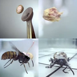 Millimetres Matter - A small jewel of realization...  [Editor's Note: Can't top laughing, brilliant war on bugs footage unlike any other]