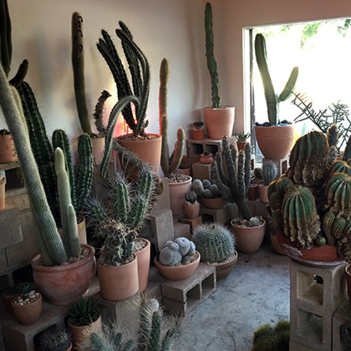 The Hot Cactus Store of Echo Park in Los Angeles is 350 sqft filled with cinder blocks and an amazing collection of rare cacti (+ pots!)! Be careful where you step... it's a surreal place with a great story!