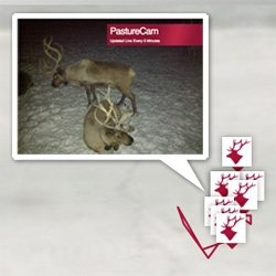 Project Reindeer - A herd of 8 reindeer you can get to know via web cam, GPS tracking, videos... and each is attached to a Gap discount that we all get depending on how challenges go each day?!?!