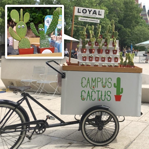 Campus Cactus! Been so intrigued by this new project from Loyal Supply Co. popping up at college campuses like Tufts... what's more fun than a cactus dressed up with googley CACT-EYES?