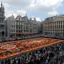 800,000 begonias carpet the centre of Brussels, but only for a few days!
