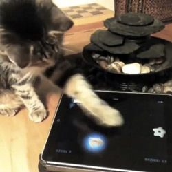 Tablet Games for Cats by Friskies ~ works on ipad and android. See the video?
