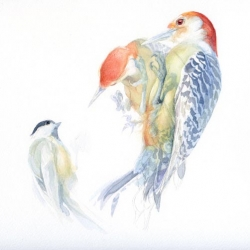 Catherine Hamilton's illustration blog, Birdspot, features some incredible sketches of birds and other creatures.