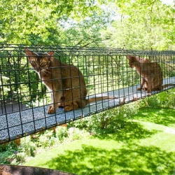 A 'Catio' Enclosures Protect Cats Outside. Great NYtimes slideshow investigating how some New Yorkers who would never let their cats roam free outside have created enclosed spaces at home that allow them to share the great outdoors.