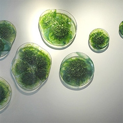 Orfeo Quagliata - artist and furniture designer - his algae cells, glass wall piece has been haunting me all week.