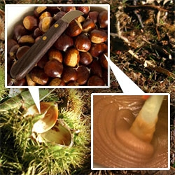 We do a bit of urban foraging in London as chestnut season arrives. Follow the journey from tree to delicious creme de marrons and marrons glacés!