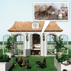 Heritage Hen Farm - Bespoke Versailles-inspired Le Petit Trianon house for your hens and chicks in the Neiman Marcus Christmas Book. (includes a library and raised garden bed!)