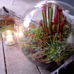 Studio Choo also visited California Carnivores! For Design*Sponge they write up how to make some awesome carnivorous terrariums