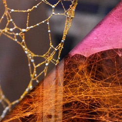 Valery Overhoff and Inge Kea's colored spiderwebs.