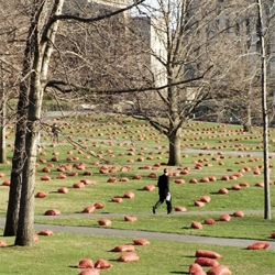 A colorful installation at the gardens of the Cornell Campus in Ithaca, done by Pezo con Ellrichshausen and a group of students, creating  a grid of red sacks filled with straw.