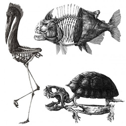 Amazing animal/skeleton prints from Theo Jan. Above is a look at 3 of the 4 available.