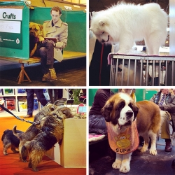 Crufts Dog Show 2014, Day 1: Working and Pastoral (Herding) Group ~ Take a peek at some of the thousands of amazing dogs, and those special moments with their owners/handlers in between the competitions.