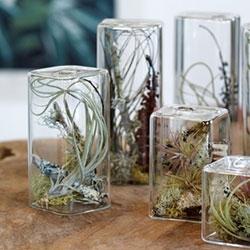 Flora Grubb Cube Aeriums