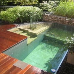 Be happy your pool is green! Skip saline and chlorine altogether and go natural. So many beautiful possibilities shown here.