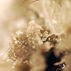 """""""Wax and Wool Experiments"""" by Louise Loveridge; macro photography."""