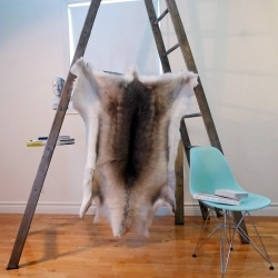 BLACK SHEEP (white light) known for their 'Eco-Friendly' Icelandic Sheepskins, is now offering sustainably sourced Reindeer Hides!