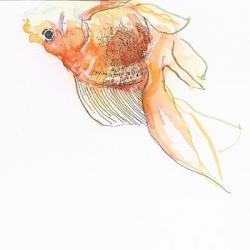 fish poor fish