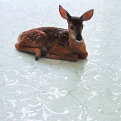 Love that a christmas card inspired Shelterrific to find out more about the story behind this baby deer... named twitter!