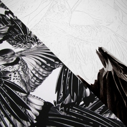 A close look at Christina Empedocles' stunning photo-realistic wax pencil renderings of mirrored birds.