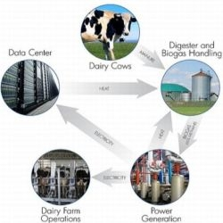HP assures cow manure, digested farm waste could power a 1,000-server data center. (Design in a picture)