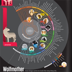 Always With Honor's Wolfmother infographic of how dogs came to be... gorgeous (and fascinating!)