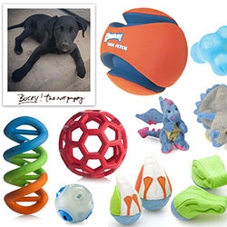 NOTCOT has a puppy! Meet Bucky - our 8 week old pup, and a roundup of rugged, fun dog toys! (Have any to add to the list?)