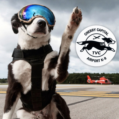 K-9 Piper - wildlife control at Cherry Capital Airport. Cute dog. Fascinating job (and gear!) and fun branded swag.