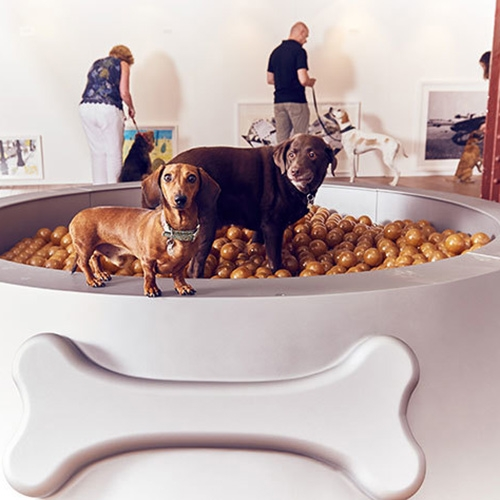 An Interactive Art Exhibition for Dogs? Fun project from More Than for their #PlayMore campaign with Dominic Wilcox in London. Specially commissioned art pieces with dog vision colors, a giant dog dish of balls, and a car window simulator!