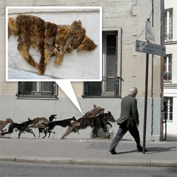 neozoon is a collective of female street artist that create wall art using old fur coats. the installations up cycle second hand furs cut into silhouettes of animals.